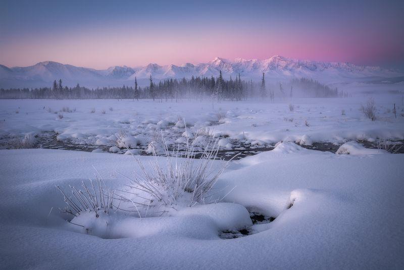 алиай, горный алтай, кош-агачский район, курайская степь, рассвет, северо-чуйский хребет, зимний алтай, снег, мороз, февраль, еловый лес, горный хребет, пояс венеры Курайские зориphoto preview
