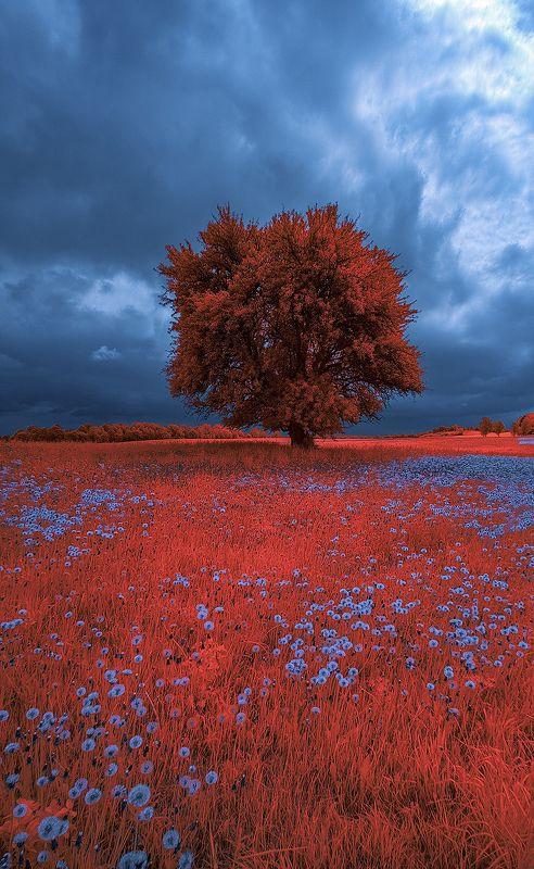 infrared,ик-фото,инфракрасное фото, инфракрасная фотография, пейзаж, весна Время голубых одуванчиков.photo preview