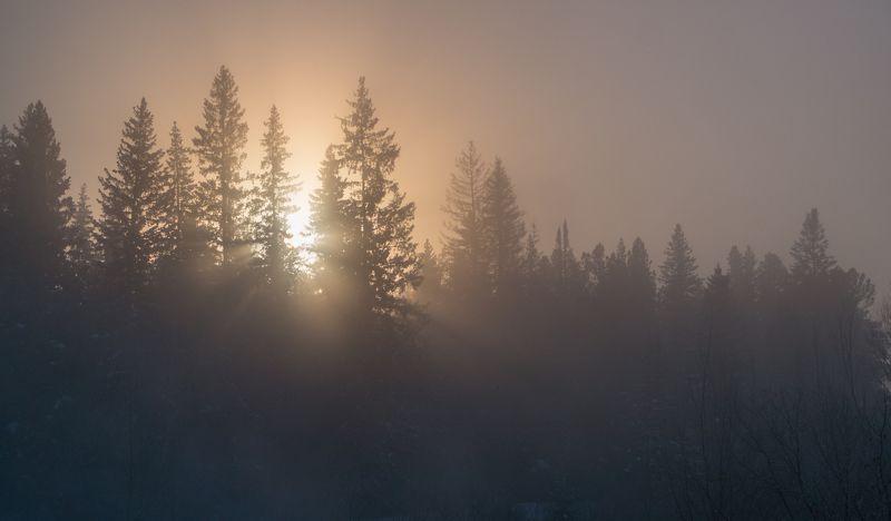 Морозное утро фото превью