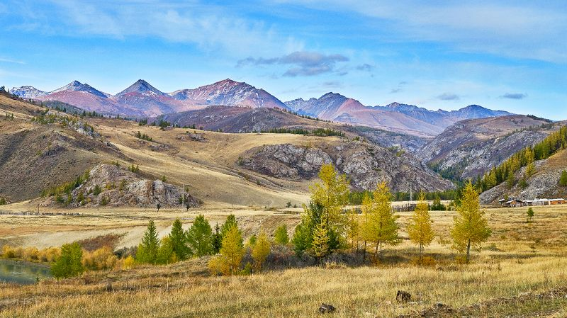 пейзаж,горы, деревья, Горный Алтай.  Новое- хорошо забытое старое! photo preview