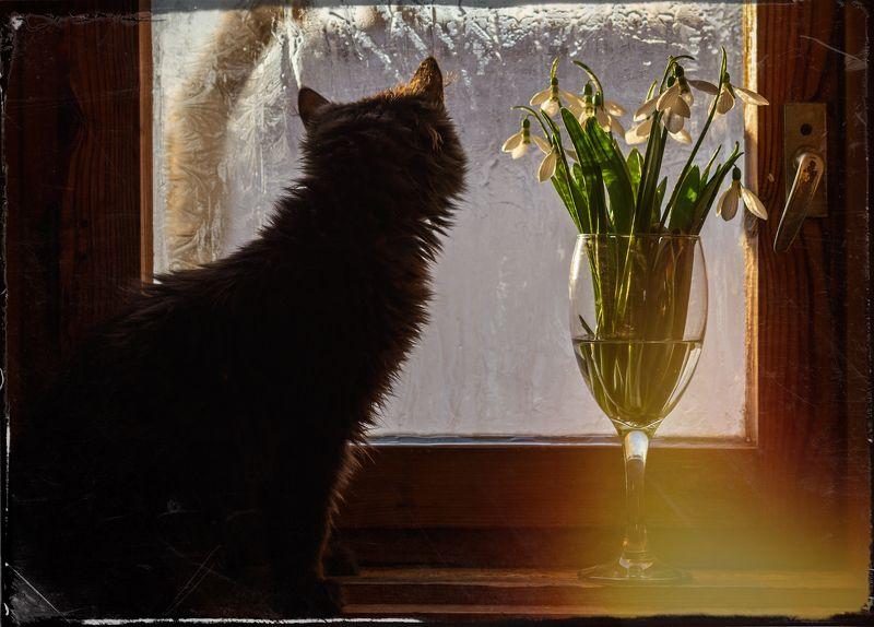 котка на первазаphoto preview