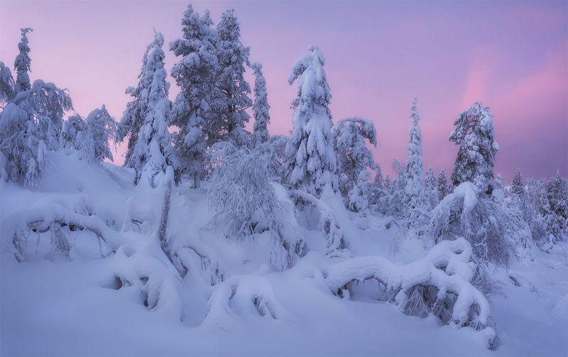 природа, пейзаж, север, кольский, панорама, природа россии, дикая природа, закат, свет, облака, вечер, тундра *photo preview