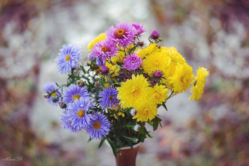 осень, астры, хризантемы, букет, цветы Яркой осени букетphoto preview