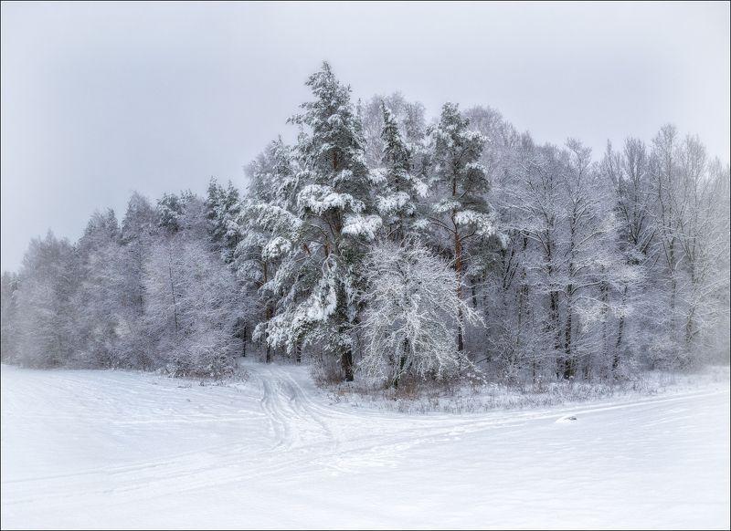 зима, лес, снег, Зимушкаphoto preview