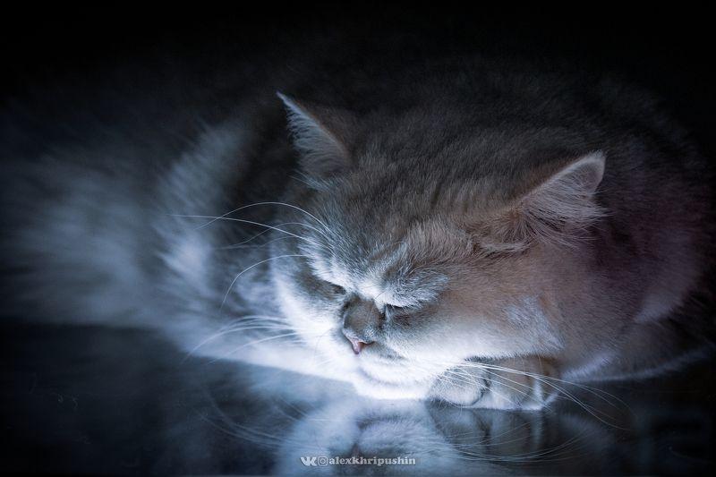 Cat Cat Noirphoto preview