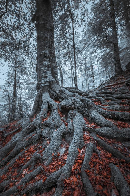 #landscape#nature#winter THE KINGphoto preview