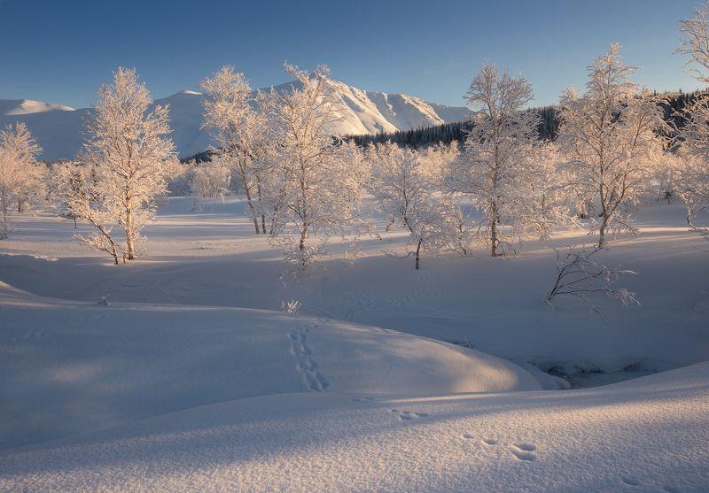 пейзаж,горы,кольский,север,хибины,следы,свет,солнце,деревья Хибиныphoto preview