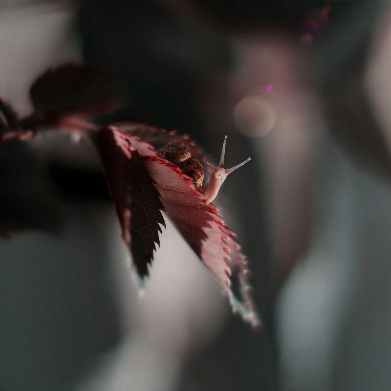 макро, арт,природа Озарениеphoto preview