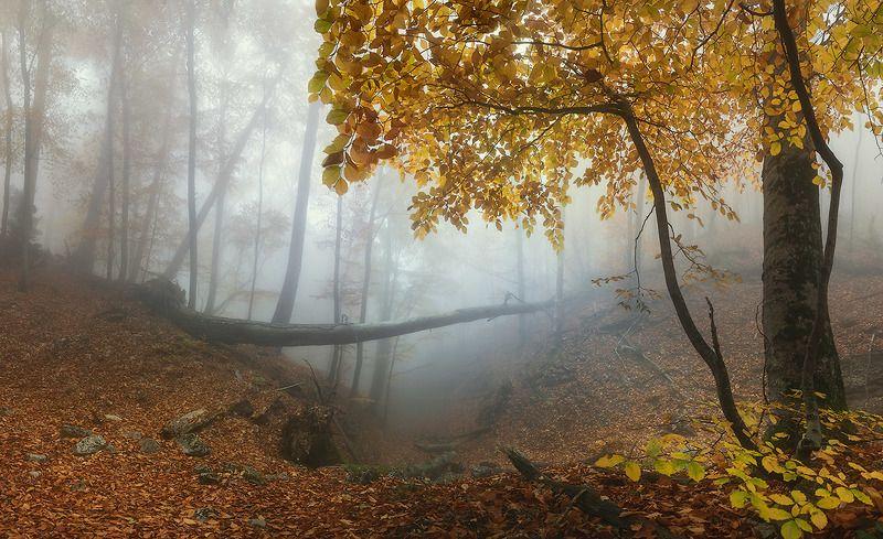 Буковый лес Ай-Петриphoto preview