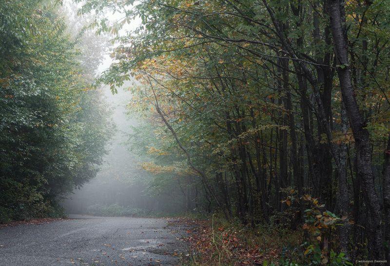 лес, туман, абхазия, осень, пасмурно Туманные лесаphoto preview