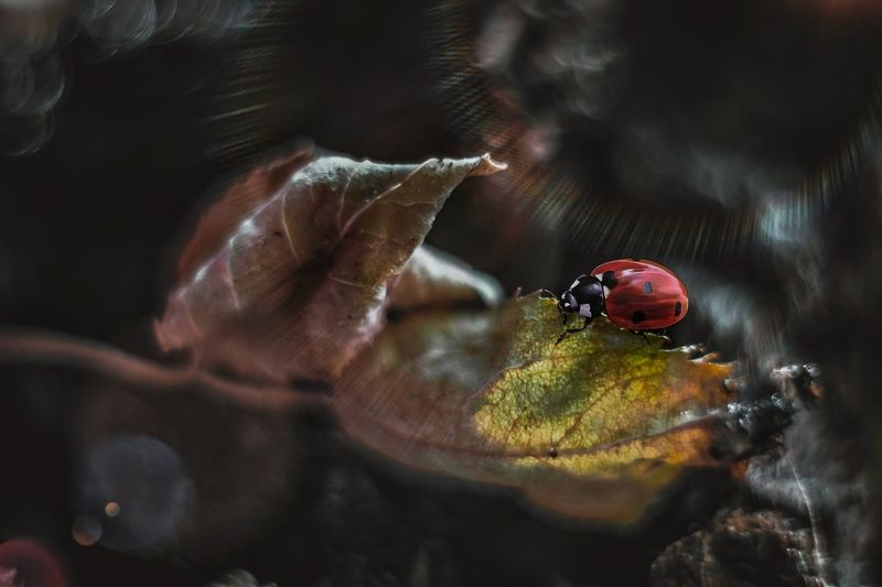 макро, арт,природа ,насекомые,осень, На листикеphoto preview