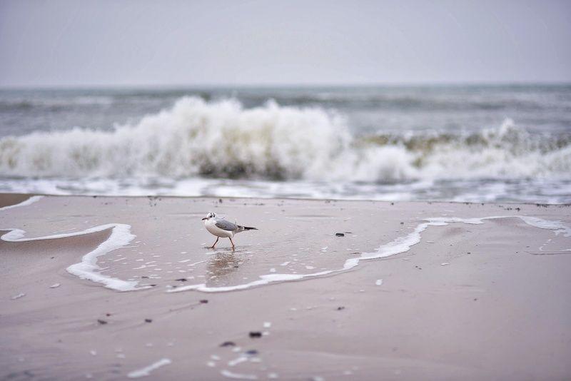 Чайка и волнаphoto preview