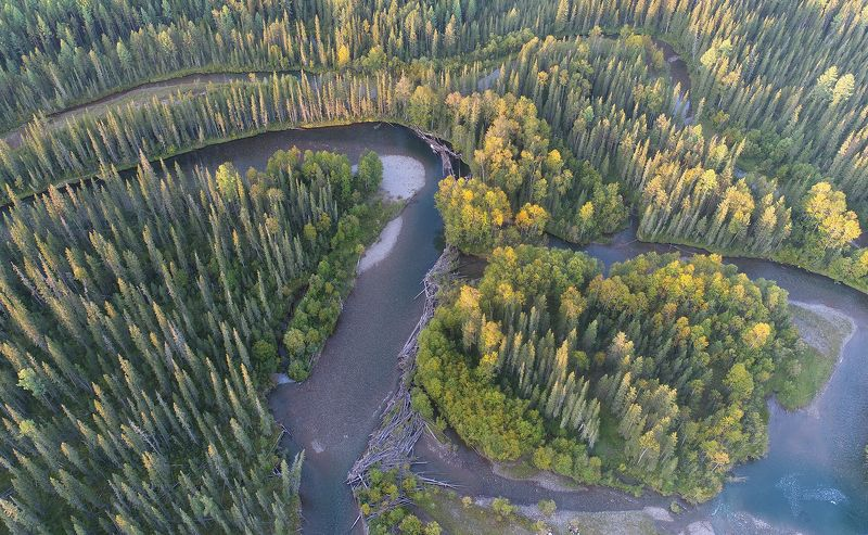 тайга река лена байкало-ленский заповедник Медвежий уголphoto preview