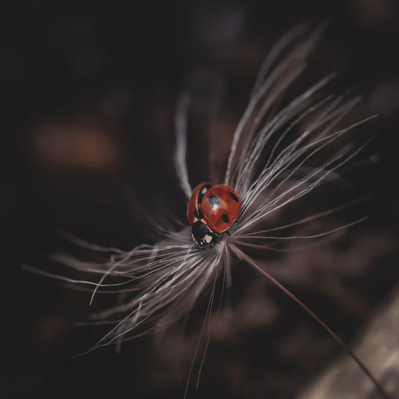 макро, арт,природа ,насекомые,цветы *photo preview