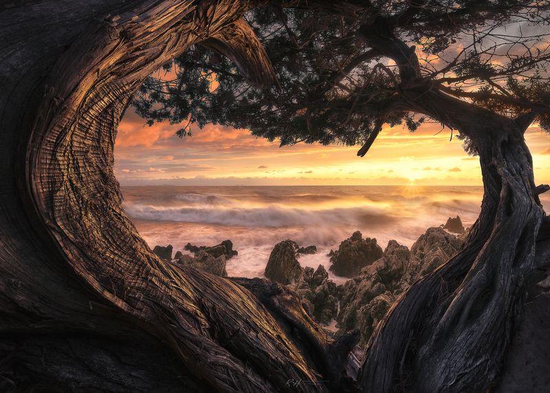 #landscape #seascape #nature #sea #sunset #trees \