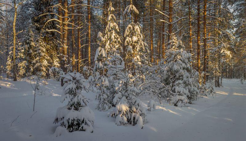 февраль вечер мороз лес В вечернем светеphoto preview