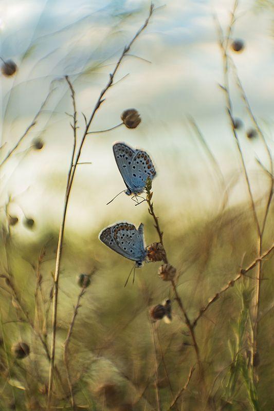 макро, бабочка Обычные делаphoto preview