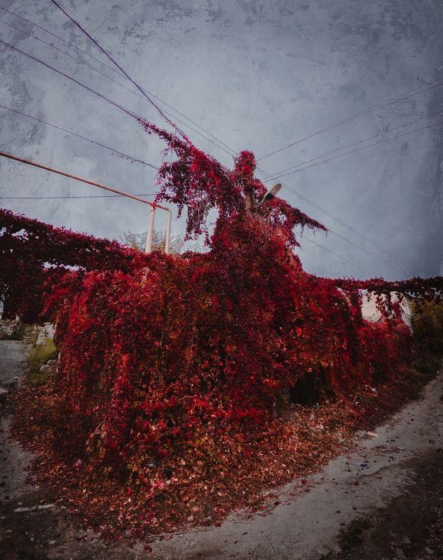 осень, распятье, виноград, улицы, боспорское царство, гора митридат, пантикапей, керчь, крым, россия, анатолий щербак РАСПЯТЬЕ.photo preview