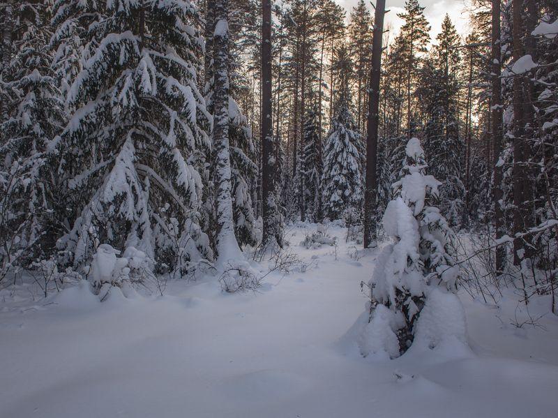 февраль вечер мороз лес Зимний этюдphoto preview