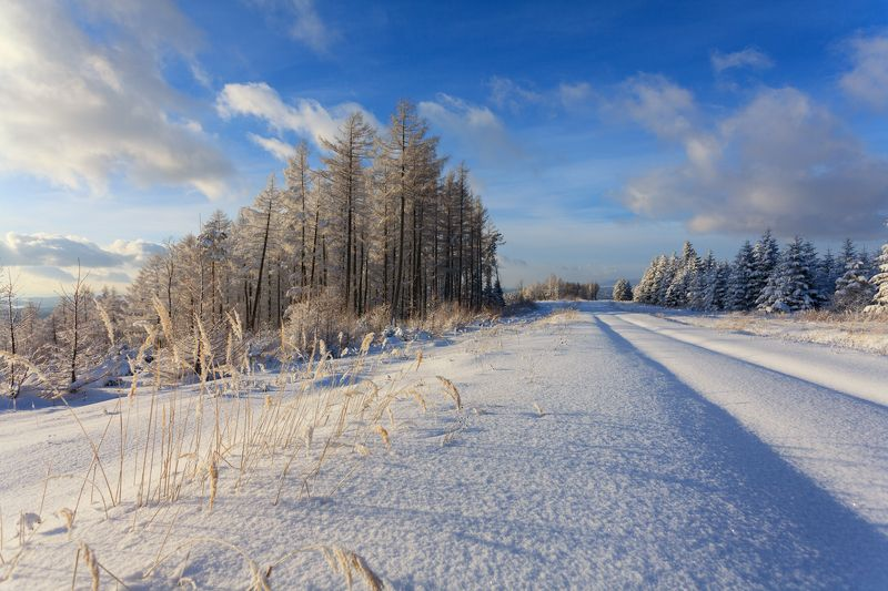 forest, snow, winter, tree, pine, mountain, ***photo preview