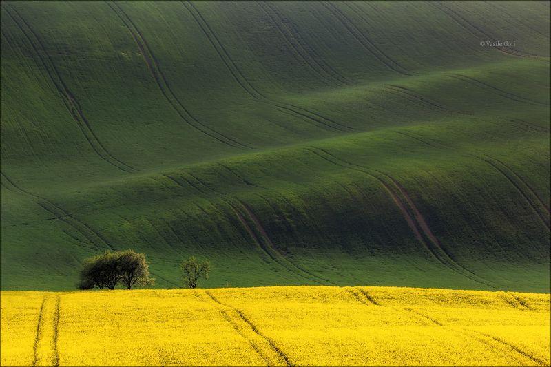 южная моравия,пейзаж, волны,линии,south moravian,lines,свет,czech,весна,чехия,landscapes,поле,рапс \