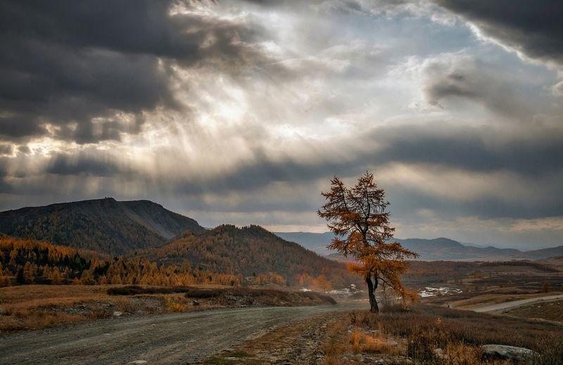 горный алтай,осень,непогода,лиственница,дорога в село джазатор Одна у дороги...photo preview