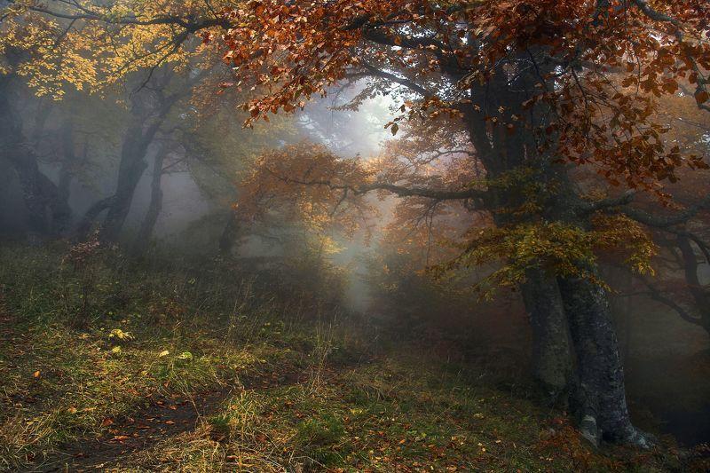 Осенняя сказка фото превью
