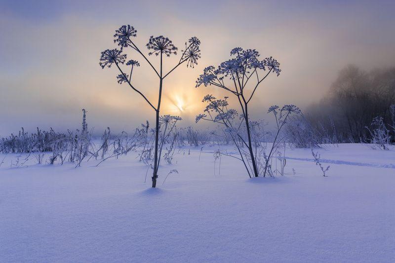 зима, пейзаж, рассвет, природа, утро, туман Вальс на рассветеphoto preview