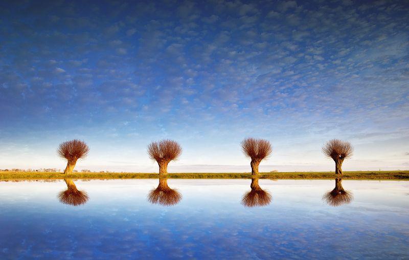 tree sky cloud mirror  Czteryphoto preview