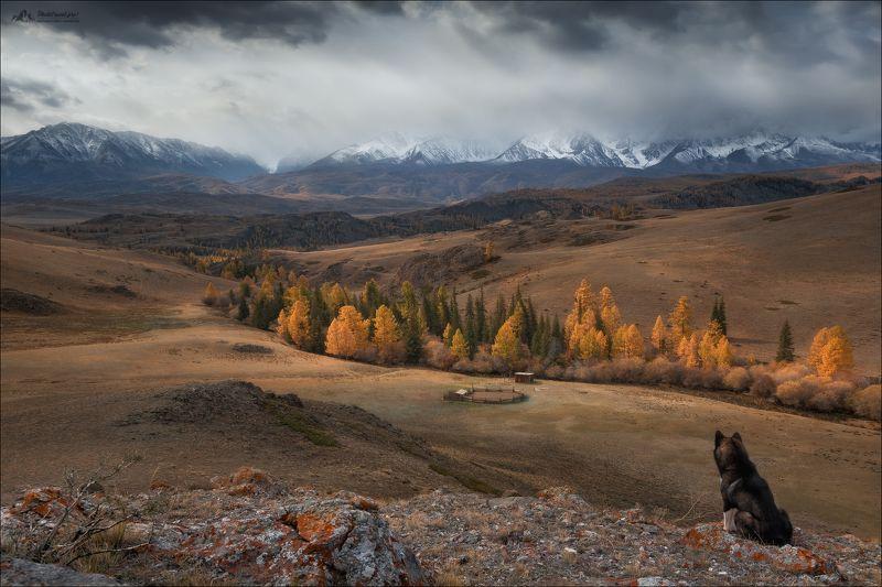 Алтай, Горный Алтай, осень, Курайская степь, СЧХ, Северо-Чуйский хребет, осень, лайка, Созерцая красотуphoto preview