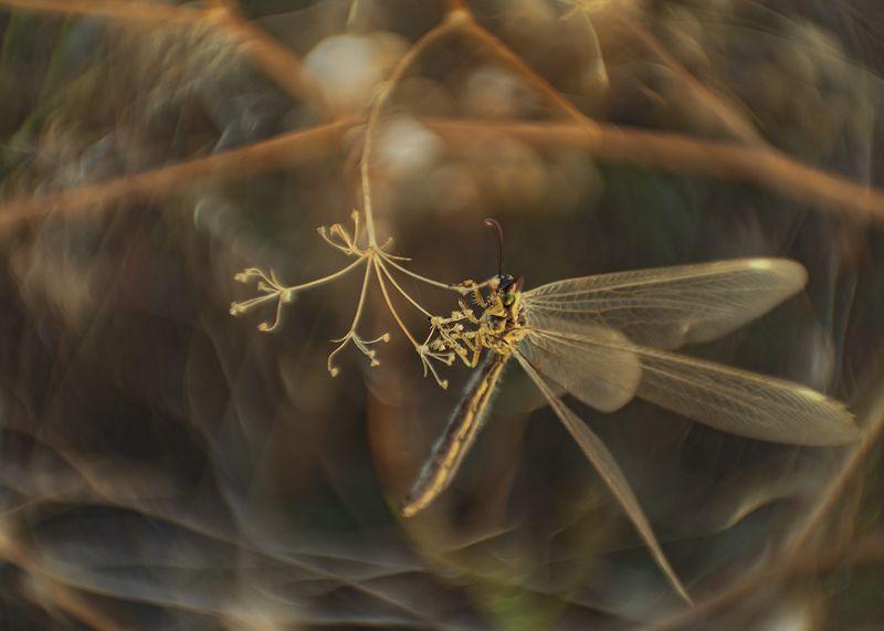 макро, насекомые, муравьиный лев Карусельphoto preview