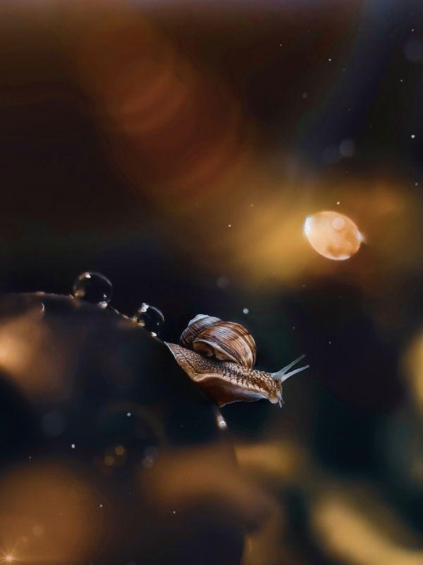 макро, природа, еда, насекомые На неизвестной планетеphoto preview