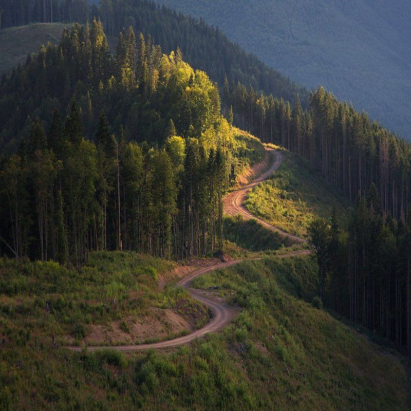 Карпаты forest roadphoto preview