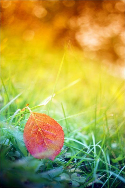 Рисуя осеньphoto preview
