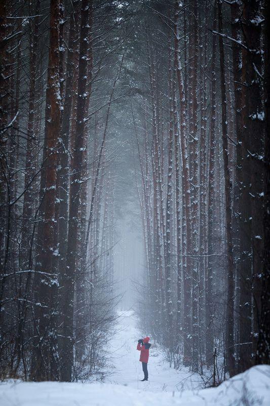 winter walk in the woods зимняя прогулка в лесу snow fog magic mist trees alone path road tunnel forest зимняя прогулка в лесуphoto preview
