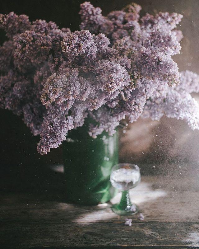 букет, лето, свет, цветы, сирень photo preview