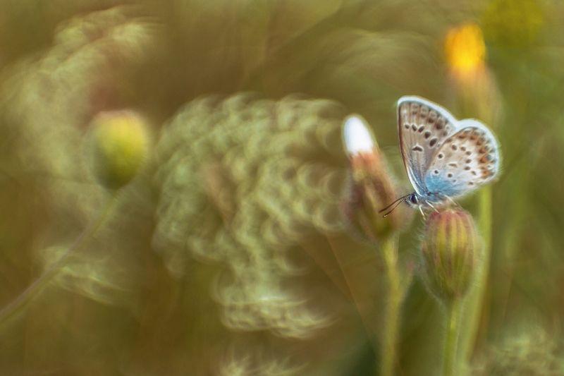 макро, бабочка, боке Лето - это маленькая жизньphoto preview
