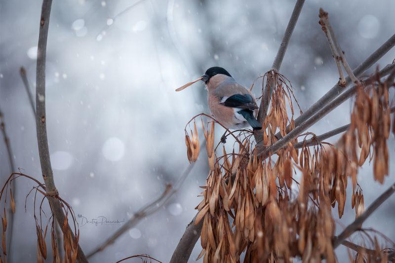природа, лес, поля, огороды, животные, птицы, макро Сказка сказкой, а кушать хочется всегдаphoto preview