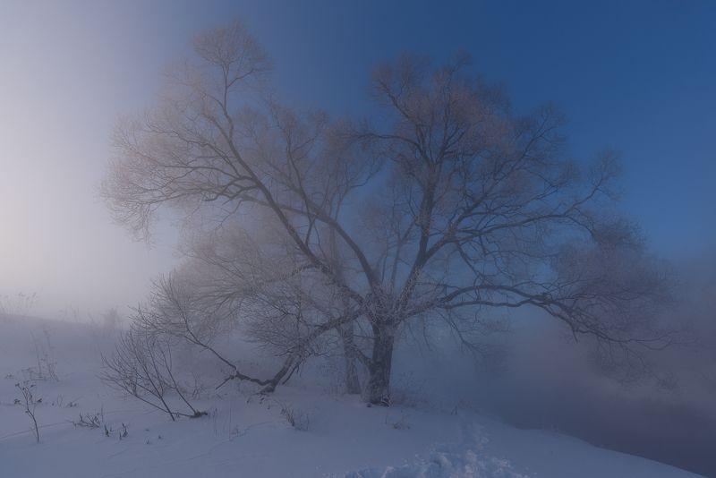 В облаке туманаphoto preview