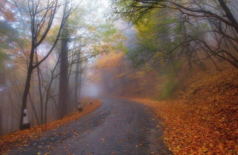 Буковый лес Ай-Ретриphoto preview