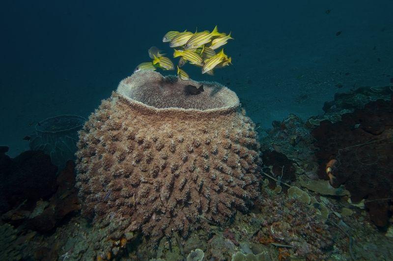 дайвинг, дайвер, рыбы, рыба, стая, океан, индонезия, подводный, синий Una-unaphoto preview
