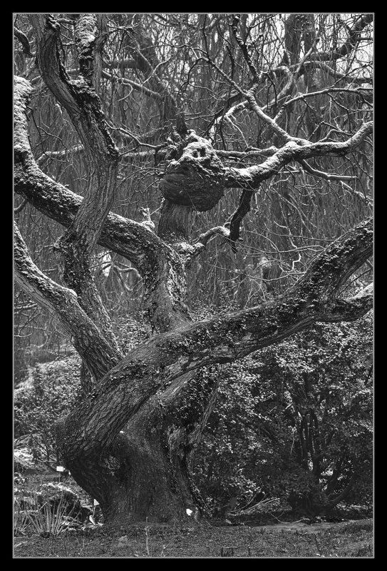 huizingen Как снег на головуphoto preview