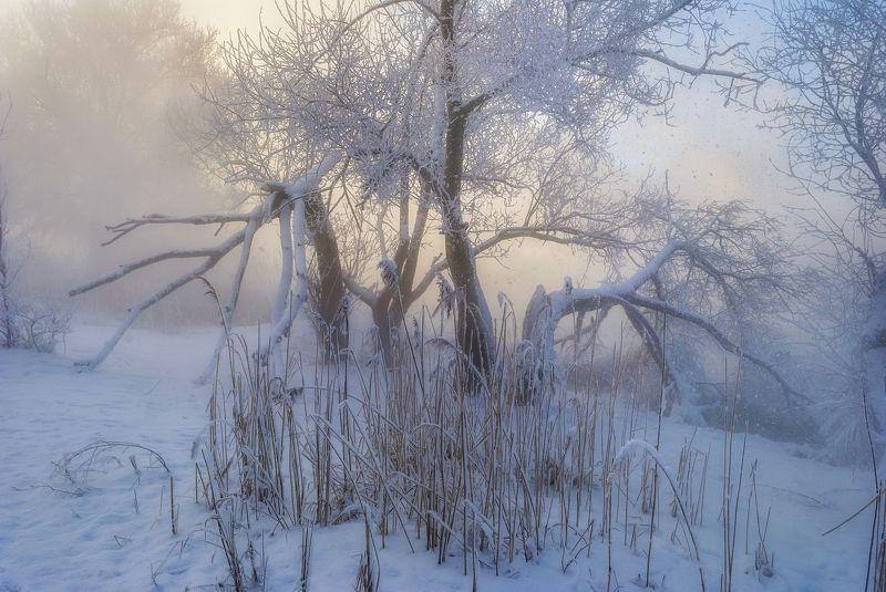 зима,иней,холод,мороз,сказка,новый год,белый снег,деревья,лёд,вода,туман,утро Зимнее утро !photo preview