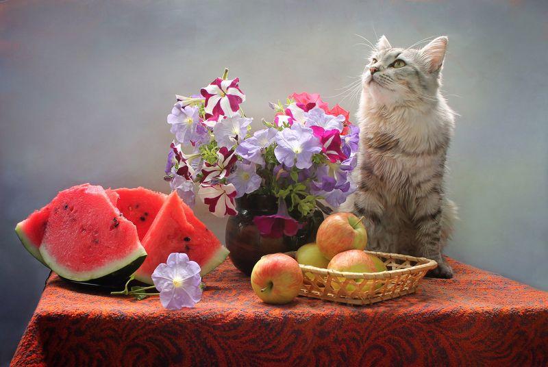 композиция, лето, арбуз, яблоки, цветы, кот, животные А помнишь лета аромат?photo preview