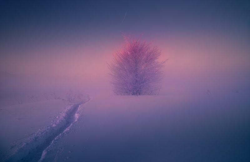 Маячок в снегах ...photo preview