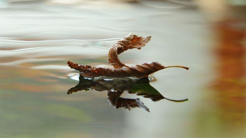 шаварёв, макро, природа, арт, фотография, В добрый путь.photo preview