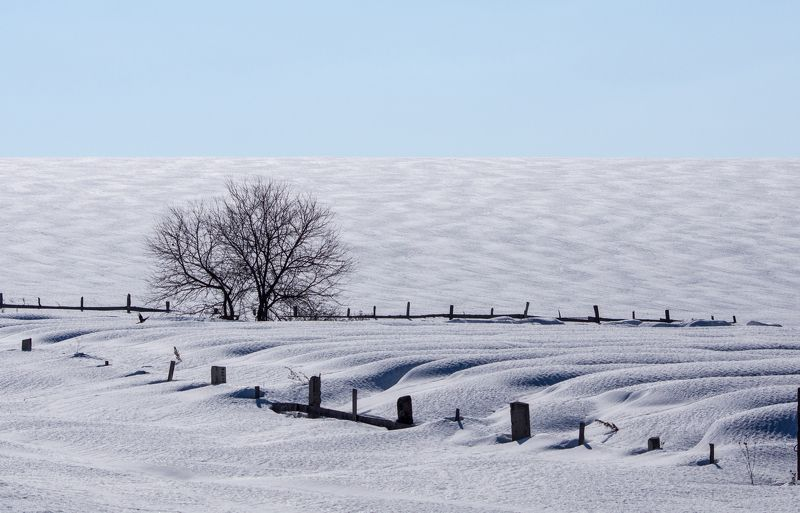 поле, зима, дерево Зимний день фото превью
