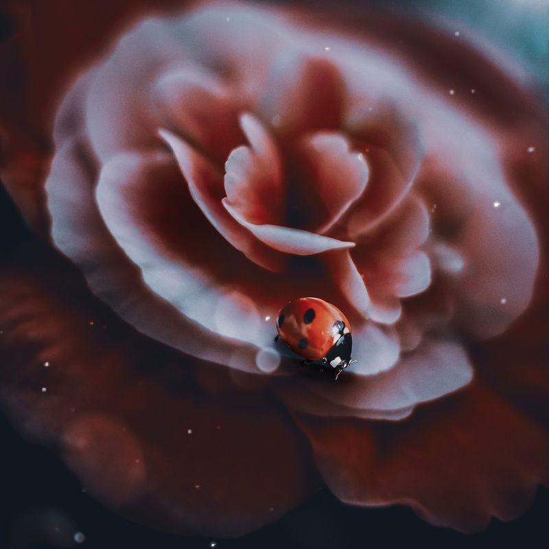 макро, по рода,насекомые,арт,цветы *photo preview
