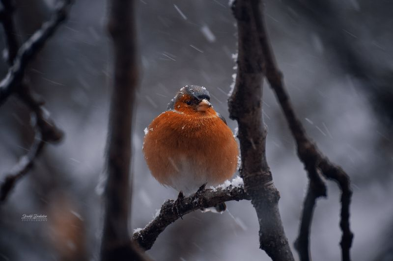 bird, animals, winter, snow, snowy day, snowing, tree, food, hungry, love, photography, nature Any food?photo preview