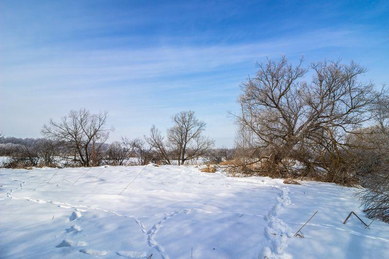 зима, природа photo preview